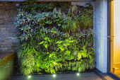 Living green vertical wall lit at night