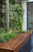 Living green wall, raised bed with timber edging, built-in benches, Liriope muscari, Hedera helix, Ipe hardwood raised bed