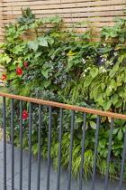 Begonia, dahlia and persicaria in living green vertical wall, balcony balustrade