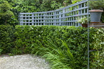 Trellis on wall, espaliered pyracantha hedge, crocosmia