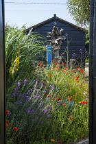 View through gate to seaside-themed garden, Papaver rhoeas, Erysimum 'Bowles's Mauve', Verbena bonariensis