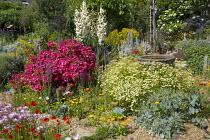Colourful seaside garden, stepping stone path through gravel, bird bath, Rosa 'Hertfordshire' syn 'Kortenay', Yucca gloriosa, Calendula officinalis