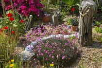 Armeria maritima, driftwood, Rosa 'Hertfordshire' syn 'Kortenay' in gravel garden