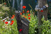 String of pebbles on driftwood post, Papaver rhoeas