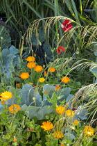 Calendula officinalis, Crambe maritima, poppies