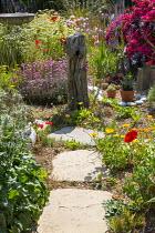 Gravel garden, Calendula officinalis, Armeria maritima, driftwood , stepping stones, Rosa 'Hertfordshire' syn 'Kortenay'