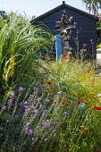 Seaside-themed garden, Papaver rhoeas, Erysimum 'Bowles's Mauve', Verbena bonariensis, black painted shed, bird sculpture