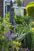 Driftwood in border, Linaria purpurea, fennel, Yucca gloriosa