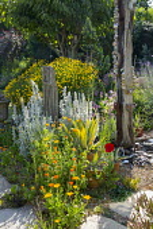 Driftwood post, Stachys byzantina, Calendula officinalis, Agave americana 'Mediopicta Alba', string of pebbles, Santolina rosmarinifolia