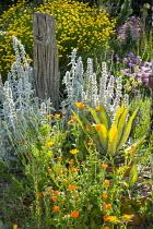Driftwood post, Stachys byzantina, Calendula officinalis, Agave americana 'Mediopicta Alba', Santolina rosmarinifolia, Erigeron glaucus 'Sea Breeze'