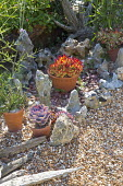 Succulents in small terracotta pots, tufa rock, gravel, driftwood