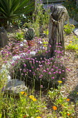 Seaside-themed garden, driftwood, Armeria maritima