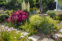 Seaside-themed garden, Rosa 'Hertfordshire' syn 'Kortenay', Yucca gloriosa, driftwood, bird bath, Oenothera acaulis