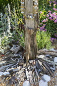 Driftwood post, string of pebbles, scallop shells, Erigeron glaucus 'Sea Breeze'