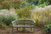 Wooden bench in autumn garden, Miscanthus sinensis 'Little Kitten' and 'Flamingo', Zelkova serrata, Euonymus alatus