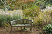 Wooden bench, Euonymus alatus, Miscanthus sinensis 'Little Kitten' and 'Flamingo', Zelkova serrata