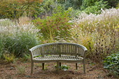 Wooden bench, Miscanthus sinensis 'Little Kitten' and 'Flamingo', Zelkova serrata, Euonymus alatus