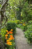 Stone path with rope edging, apple blossom, Malus domestica 'James Grieve', Tulipa 'Beauty of Apeldoorn'