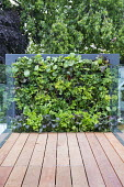 Living green vertical wall with edible plants, salad leaves and herbs