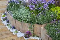 Wooden border edging, rainbow sandstone paving, white gravel, lavender and chives