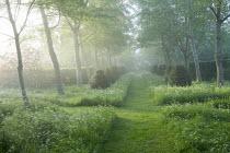 Mown path thorugh woodland, Anthriscus sylvestris