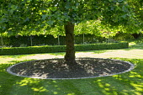 Circular border edged with stone setts around base of Liriodendron tulipifera