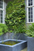 Living green vertical wall against house, raised beds and pond