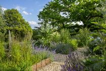 Gravel garden, woven willow edging, Nepeta 'Six Hills Giant', cynara, Calamagrostis x acutiflora 'Karl Foerster', Castanea sativa