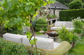 Outdoor sofas with cushions around brazier on patio, agapanthus and standard grape vine, Vitis 'Triomphe d'Alsace', in terracotta pots