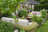 Outdoor sofas with cushions around brazier on patio, agapanthus and standard grape vine, Vitis 'Triomphe d'Alsace' in terracotta pots, Rosa 'Phyllis Bide'