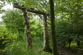 Wooden arch, tree stumps