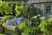 Outdoor sofas with cushions, agapanthus and standard grape vine, Vitis 'Triomphe d'Alsace', in pots