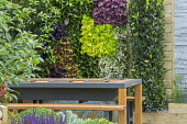 Living green vertical wall with heuchera, bergenia and erigeron, contemporary table on patio