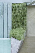 Living green wall, Carex comans 'Frosted Curls'