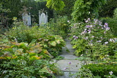 Gothic wooden chairs, Japanese anemones, stone path