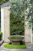 Contemporary water fountain and pool on stone terrace, Muehlenbeckia complexa, living green wall, Olea europaea, granite panels with shot-blasted fern pattern