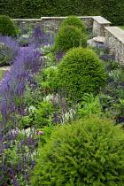 Nepeta racemosa 'Walker's Low' border edging, row of Taxus baccata domes, Cirsium rivulare 'Atropurpureum', Salvia x sylvestris 'Schneehügel', Salvia verticillata 'Purple Rain', stone walls