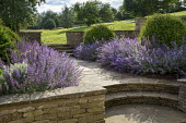 Nepeta racemosa 'Walker's Low' border edging, Taxus baccata domes, stone walls and steps