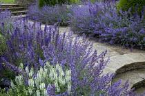 Nepeta racemosa 'Walker's Low' border edging, stone path, Salvia x sylvestris 'Schneehügel', Salvia x sylvestris 'Mainacht'