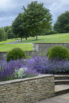 Nepeta racemosa 'Walker's Low', Cirsium rivulare 'Atropurpureum', Taxus baccata domes, stone walls, Salvia x sylvestris 'Schneehügel', Salvia x sylvestris 'Mainacht'