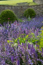Nepeta racemosa 'Walker's Low' border edging, Taxus baccata domes, Cirsium rivulare 'Atropurpureum', Salvia verticillata 'Purple Rain', stone walls