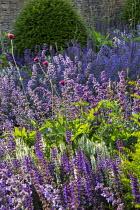 Nepeta racemosa 'Walker's Low', Taxus baccata dome, Cirsium rivulare 'Atropurpureum', Salvia x sylvestris 'Schneehügel', Salvia verticillata 'Purple Rain'