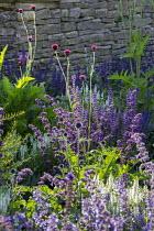 Nepeta racemosa 'Walker's Low', Cirsium rivulare 'Atropurpureum', Salvia x sylvestris 'Schneehügel', Salvia verticillata 'Purple Rain'