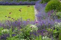 Nepeta racemosa 'Walker's Low' border edging, Taxus baccata domes, Cirsium rivulare 'Atropurpureum', Salvia x sylvestris 'Schneehügel', Salvia verticillata 'Purple Rain', stone mowing strip