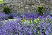 Nepeta racemosa 'Walker's Low', Taxus baccata buttresses, Cirsium rivulare 'Atropurpureum', Salvia x sylvestris 'Schneehügel', Salvia verticillata 'Purple Rain'