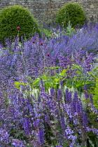 Nepeta racemosa 'Walker's Low', Taxus baccata domes, Cirsium rivulare 'Atropurpureum', Salvia x sylvestris 'Schneehügel', Salvia verticillata 'Purple Rain'