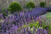 Nepeta racemosa 'Walker's Low' border edging, Taxus baccata domes, Cirsium rivulare 'Atropurpureum', Salvia verticillata 'Purple Rain', stone mowing strip