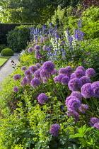 Alliums, thalictrum, campanula, delphiniums, Alchemilla mollis edging
