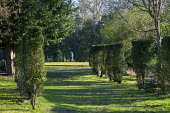 Pathway lined with clipped yew hedges, view to statue