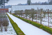 Snow-covered path in walled kitchen garden leading to glasshouses, box edging, trained fruit tree screens
